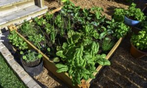 Seed-Starting Tips to Help You Get Started on Your Garden
