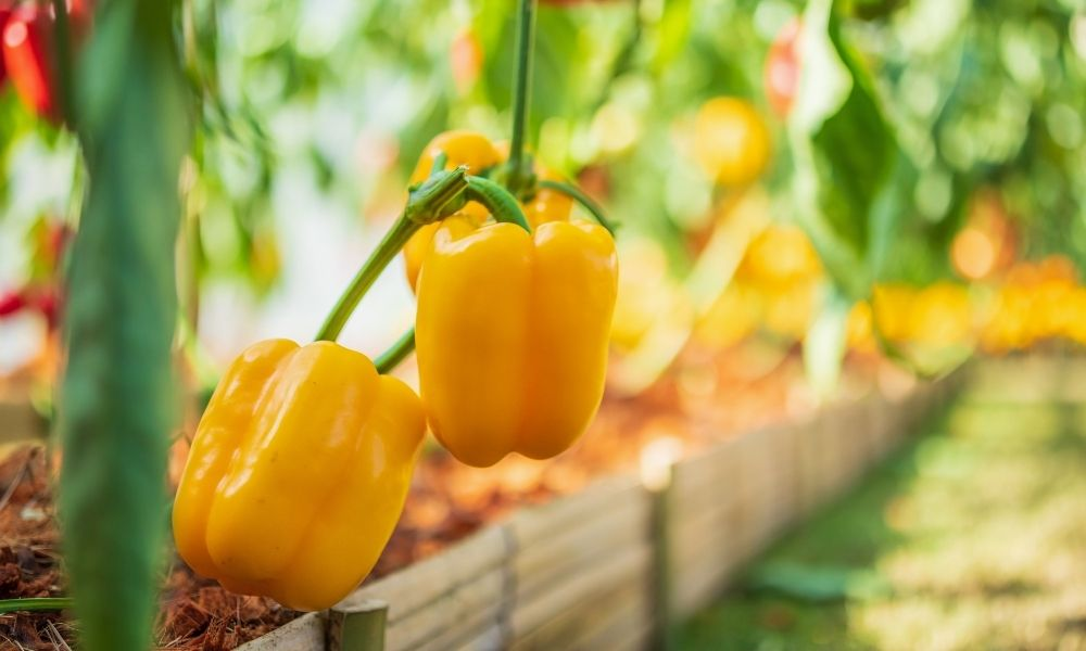 Most Nutritious Fruits and Veggies You Can Grow at Home