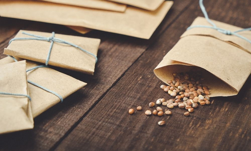A Guide to Properly Storing Heirloom Seeds