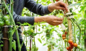The Many Benefits of Growing Your Own Food
