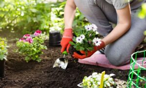 The Most Common Gardening Mistakes You Need To Avoid